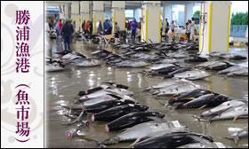 勝浦漁港(魚市場)