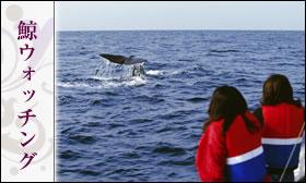 鯨ウォッチング